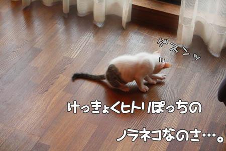 サークル入会希望5