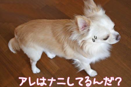 ニンジンキライ1