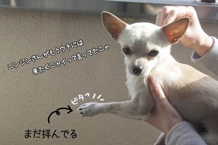 ニンジンキライ3