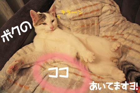 草食男子8
