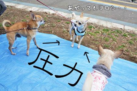 駒沢公園でお花見1