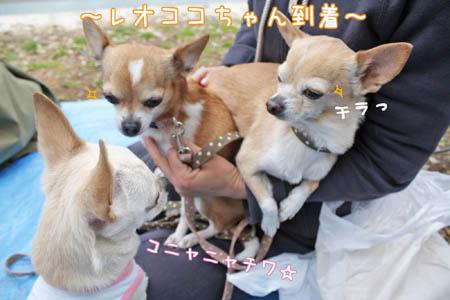 駒沢公園でお花見6