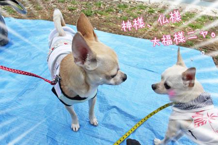 駒沢公園でお花見4