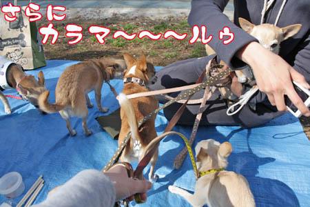 駒沢公園でお花見11