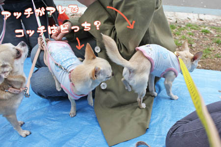 駒沢公園でお花見9