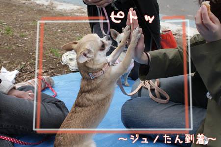 駒沢公園でお花見7