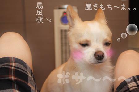 ゴマおこげチャン10