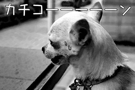 mamehiko7.jpg