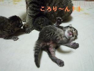 2008.12.23仔猫生後5日 (11)