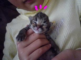 2008.12.25子猫生後7日 (3)