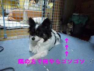 2009.1子猫生後32日目4-1
