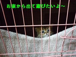 2009.1仔猫4-2生後38日目 (2)