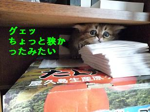 2009.1仔猫4-2生後38日目 (15)