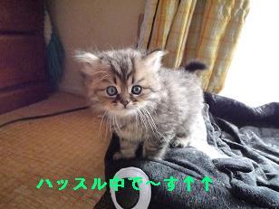2009.1子猫生後42日目4-2 (1)
