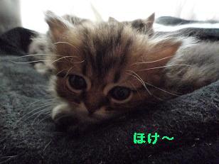 2009.1子猫生後42日目4-2 (4)