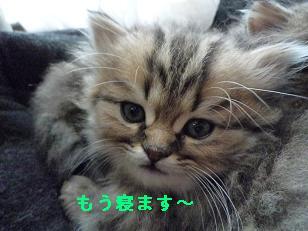 2009.1子猫生後42日目4-2 (5)