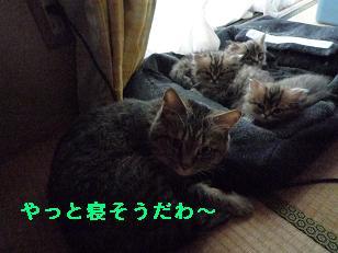 2009.1子猫生後42日目4-2 (7)