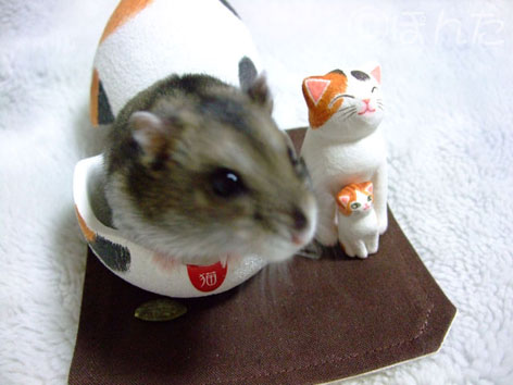 卵猫とみー1