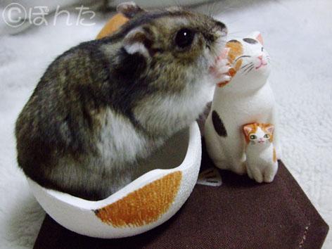 卵猫とみー2