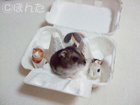 卵猫とみー3