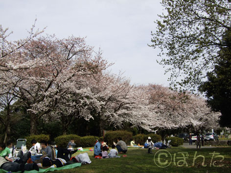 2009桜8
