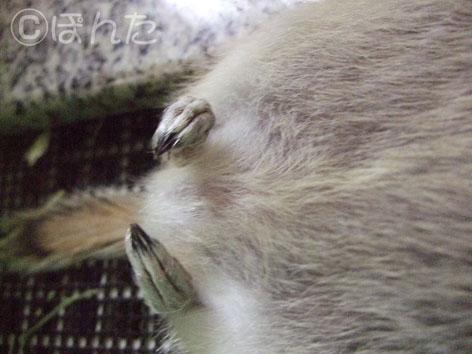 ぴきぴき_すやすや5