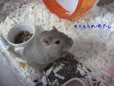 あんず子_モリモリ4