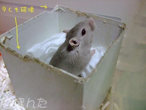 あんず子_箱1