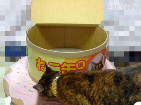 うに_ネコ缶4