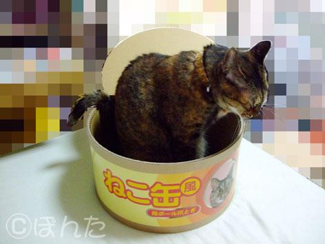 うに_ネコ缶1