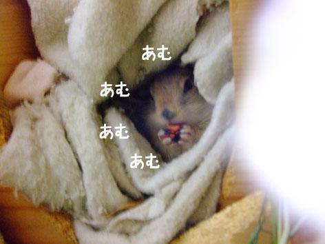 ぴきぴき_にんじん4