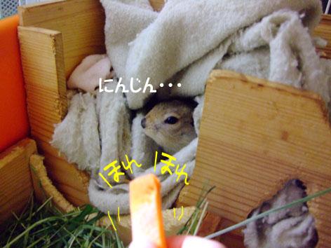 ぴきぴき_にんじん2