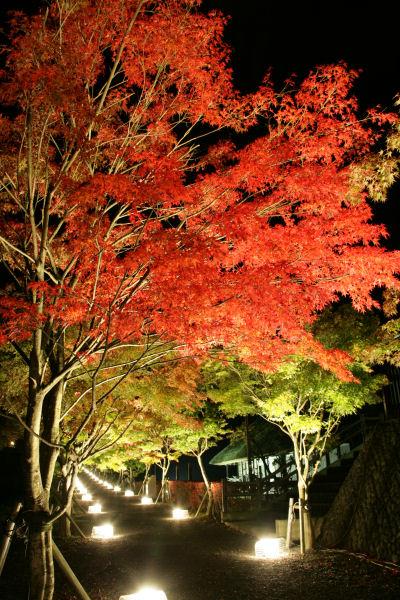 20051022_05_yoshida.jpg