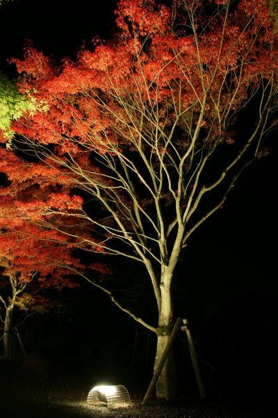 20051022_06_yoshida.jpg