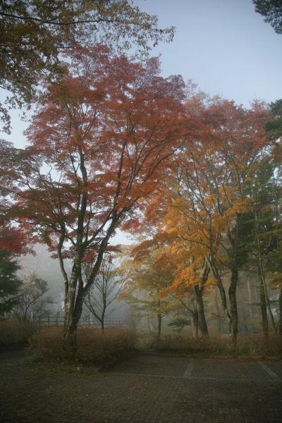 20051105_06_asahi.jpg