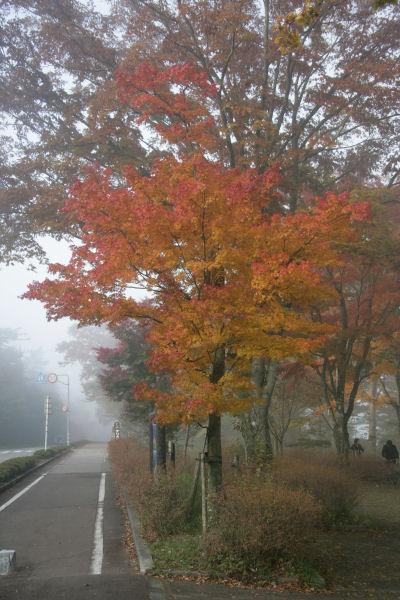 20051105_07_asahi.jpg