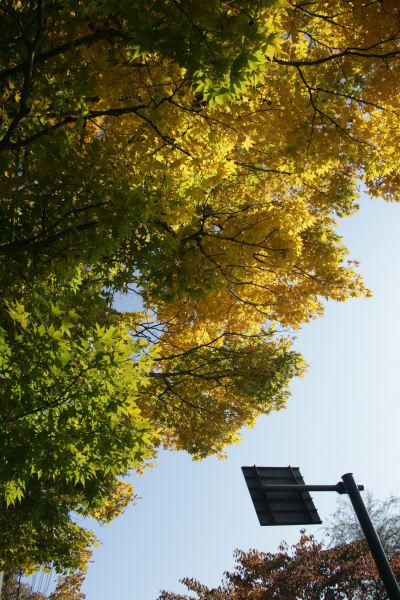20051105_13_yamanaka.jpg