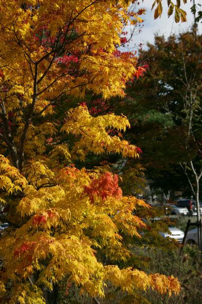 20051105_22_fujisaki.jpg