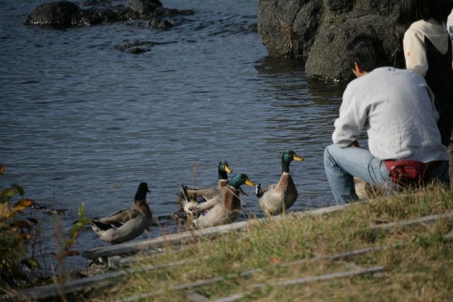 20051105_25_fujisaki.jpg