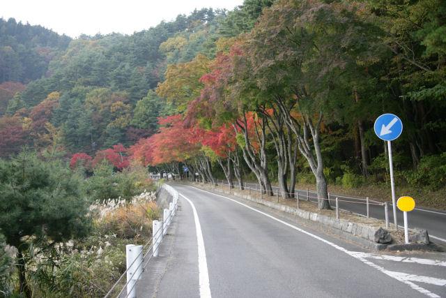 20051105_34_momijitunnel.jpg