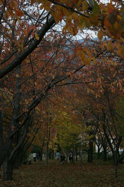 20051105_48_kawaguchi.jpg