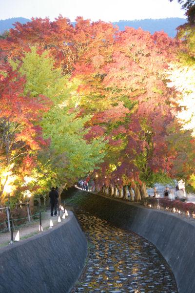 20051105_50_m-kairou.jpg