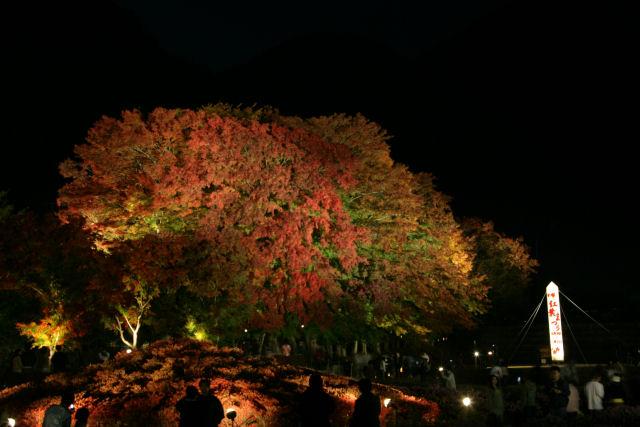20051105_51_m-kairou.jpg