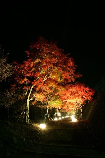 20051105_57_yoshida.jpg