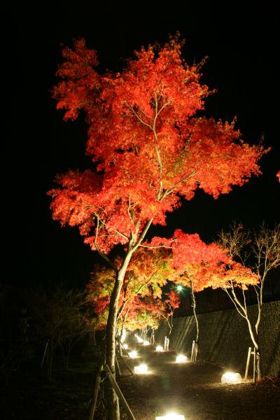 20051105_58_yoshida.jpg
