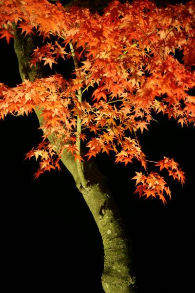 20051105_60_yoshida.jpg