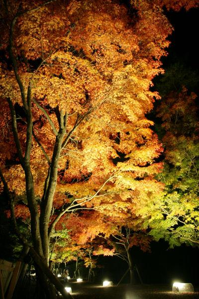 20051105_61_yoshida.jpg