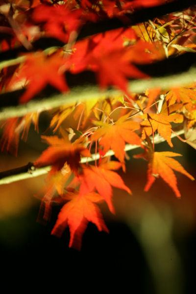 20051105_62_yoshida.jpg