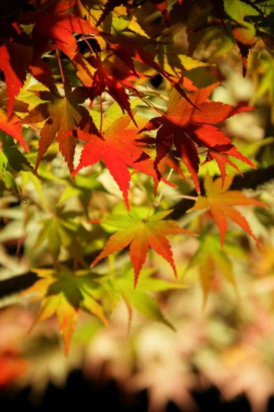 20051105_63_yoshida.jpg