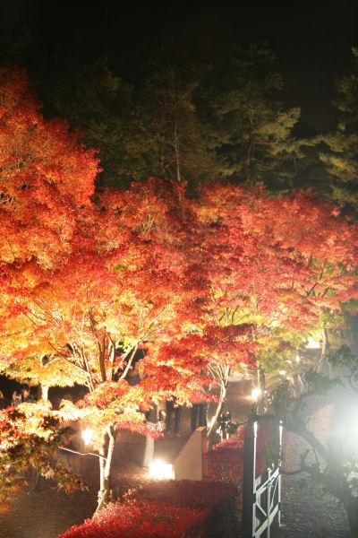 20051105_65_yoshida.jpg